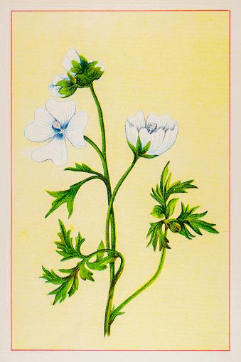 Tropical Jewel Hibiscus Clip Art, Vector Images & Illustrations.