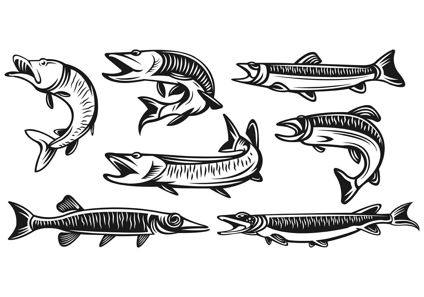 Set Of Muskie Fish Vectors.