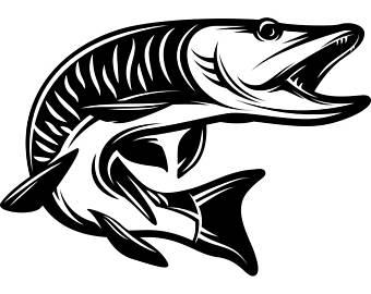 Muskie Fish Clipart.