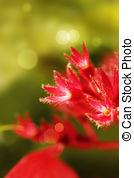 Stock Photos of Mussaenda Philippica Virgin Tree in Garden.