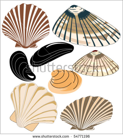 Mussel Shell Stock Photos, Royalty.