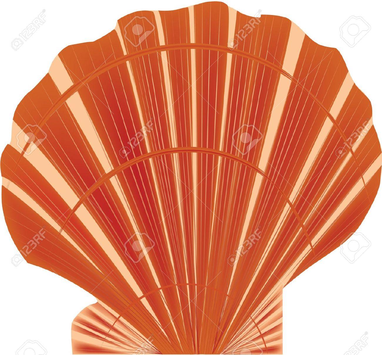 Sea Shell Royalty Free Cliparts, Vectors, And Stock Illustration.