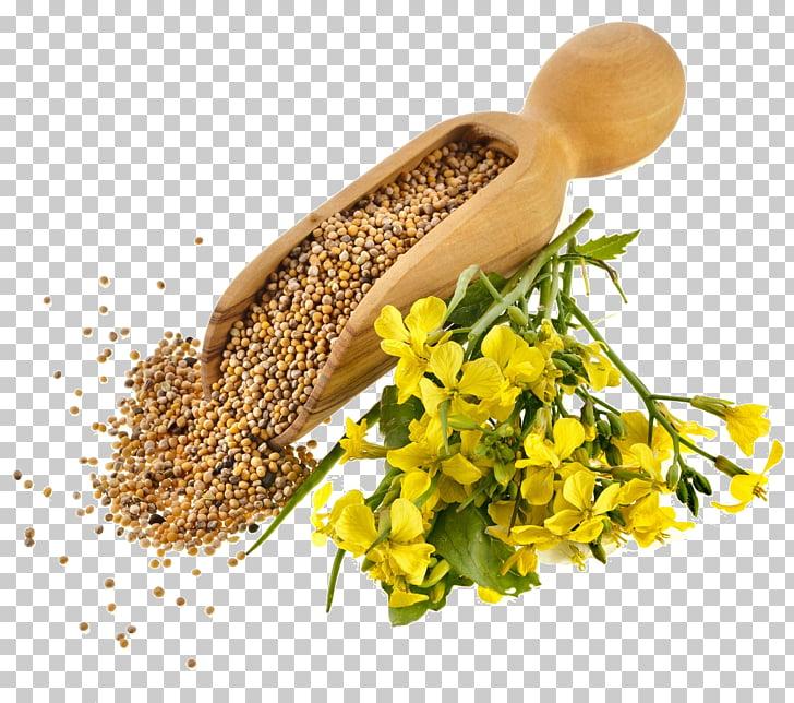 Indian cuisine Mustard plant Mustard seed Mustard oil Seed.