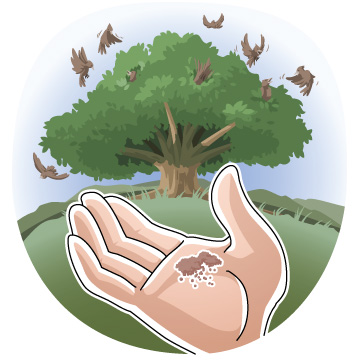 Christian clipArts _ Parable of the Mustard Seed.