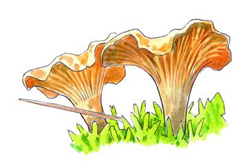 girolle.jpg (1164×756).