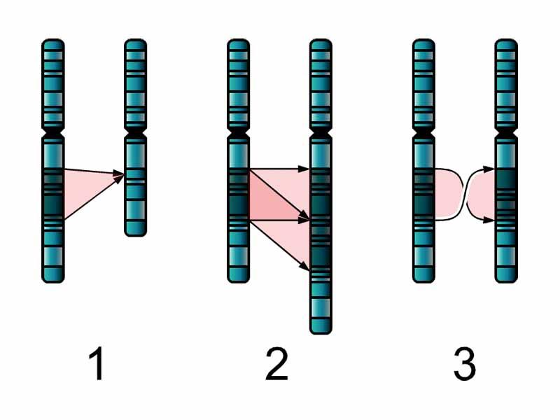 Genome 20clipart.