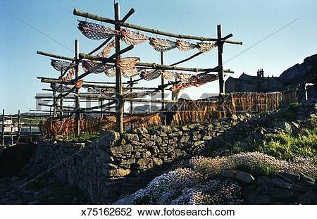 Stock Photo of Conger drying. Muxia. A Coruna. Costa da Morte.