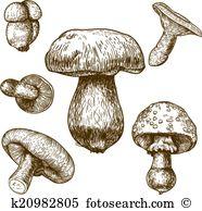 Mycology Clip Art Illustrations. 45 mycology clipart EPS vector.