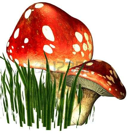 165 Mycology Cliparts, Stock Vector And Royalty Free Mycology.