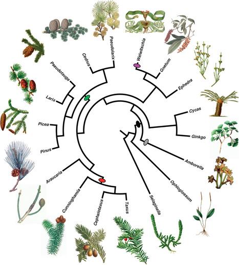 Mycorrhiza: plant.