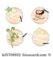 Mycorrhizal Clip Art Vector Graphics. 10 mycorrhizal EPS clipart.