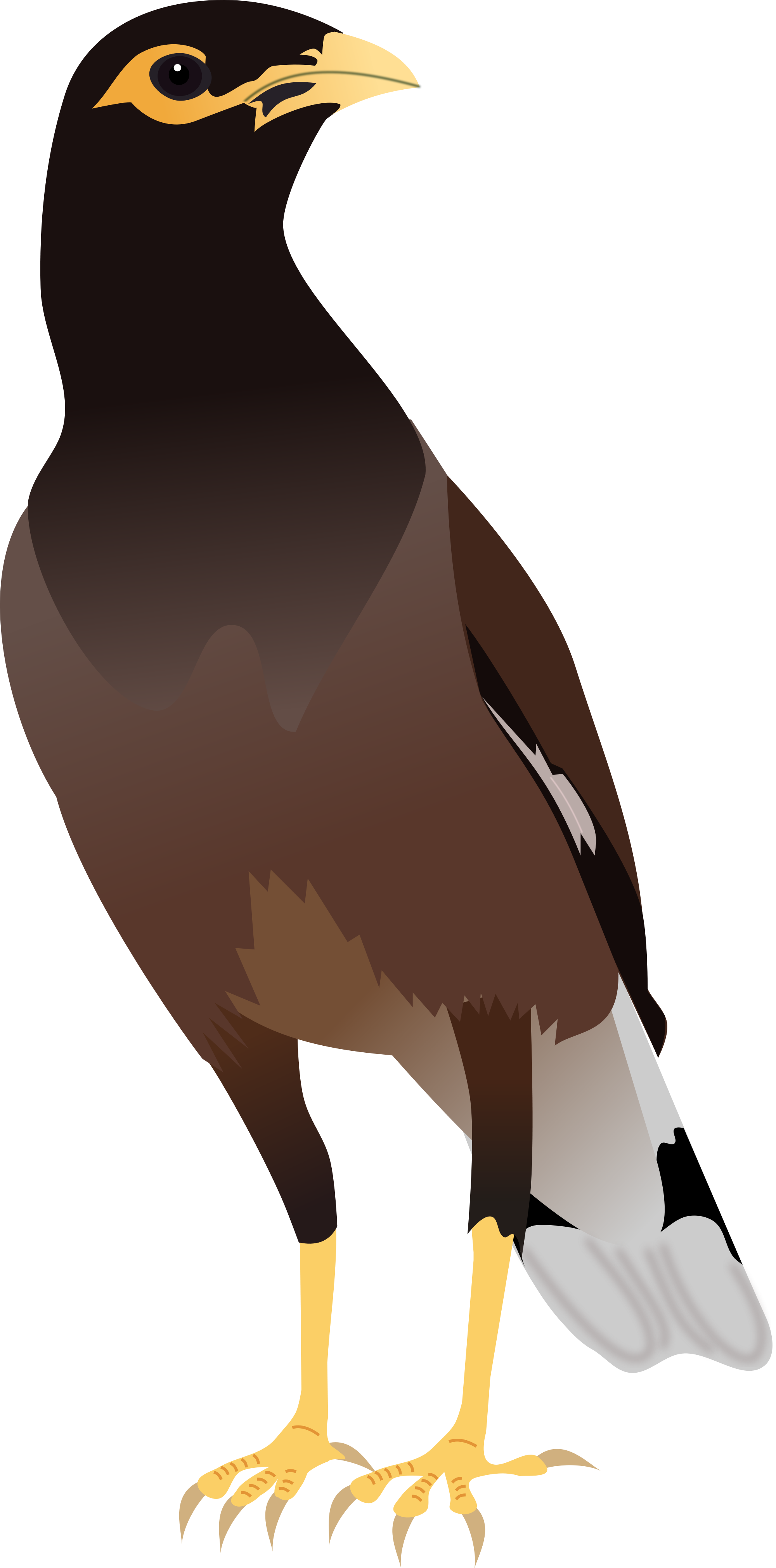 File:Common Myna.svg.