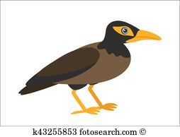 Myna Clipart EPS Images. 13 myna clip art vector illustrations.