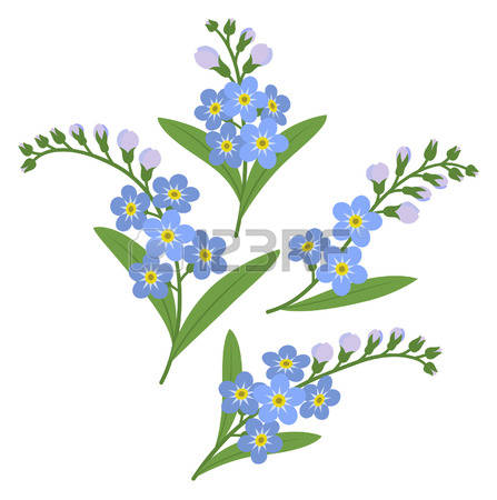 159 Myosotis Stock Vector Illustration And Royalty Free Myosotis.