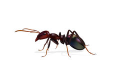 Ant Stock Illustrations.