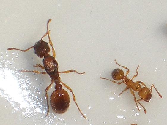 Ants Kalytta.