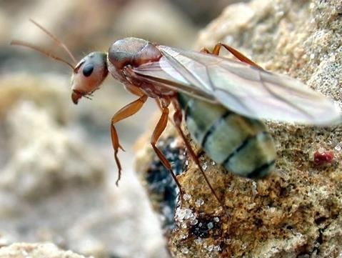 1000+ ideas about Queen Ant on Pinterest.