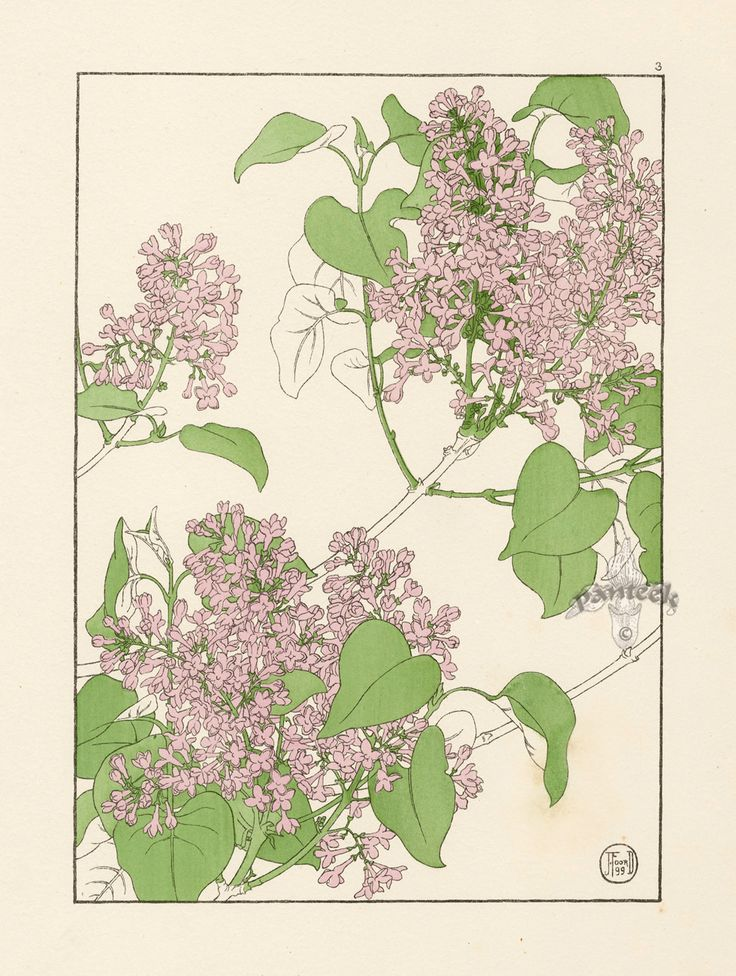 1000+ images about Draw ~ Botanical on Pinterest.