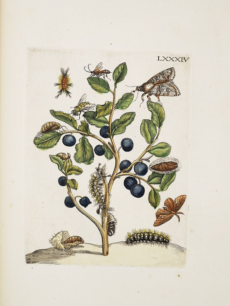 1000+ images about ILLUSTRATION: Botanicals on Pinterest.