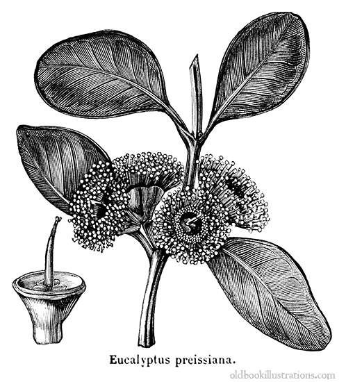 1000+ images about Botanical illustrations on Pinterest.