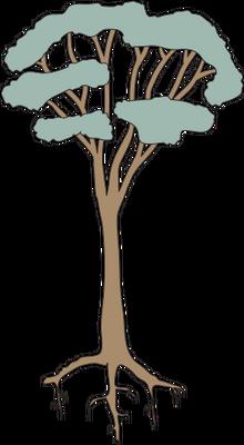 Eucalyptus spp. (Eucalypt) 3.