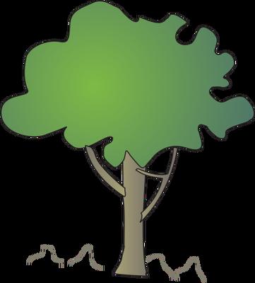 Lumnitzera racemosa.