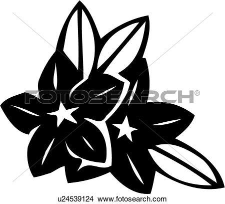 Clipart of , flower, myrtle, s, varieties, u24539124.
