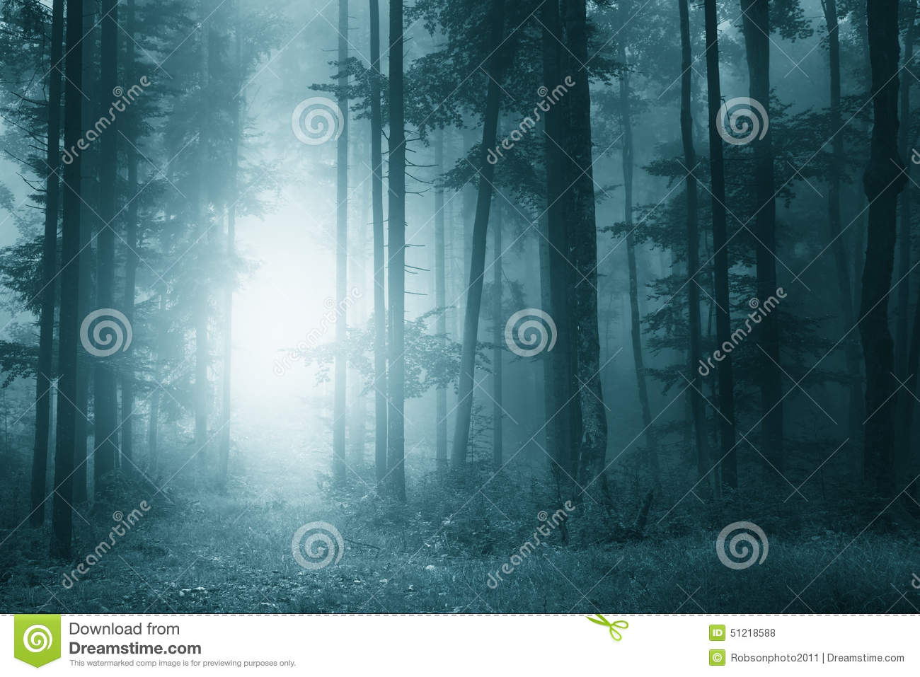 Mystic Turquoise Blue Forest Stock Photo.
