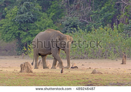 Nagarhole Stock Photos, Royalty.