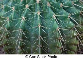 Kaktus nahaufnahme Stock Illustrationen. 101 Kaktus nahaufnahme.
