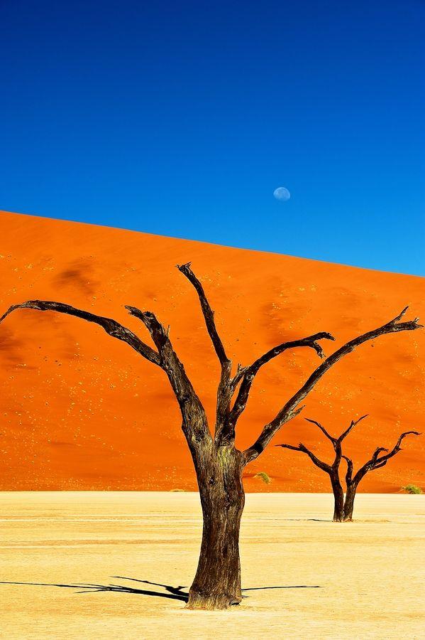 1000+ ideas about Namib Desert on Pinterest.
