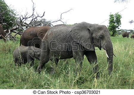 Stock Photo of Elephant Family Walking in Namibian Desert.