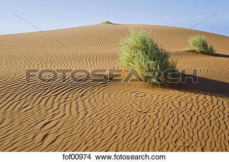 Stock Photo of Africa, Namibia, Nara.