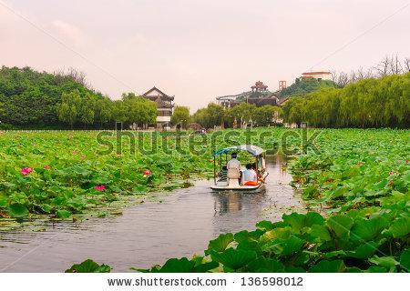 Lotus Pond Stock Photos, Royalty.
