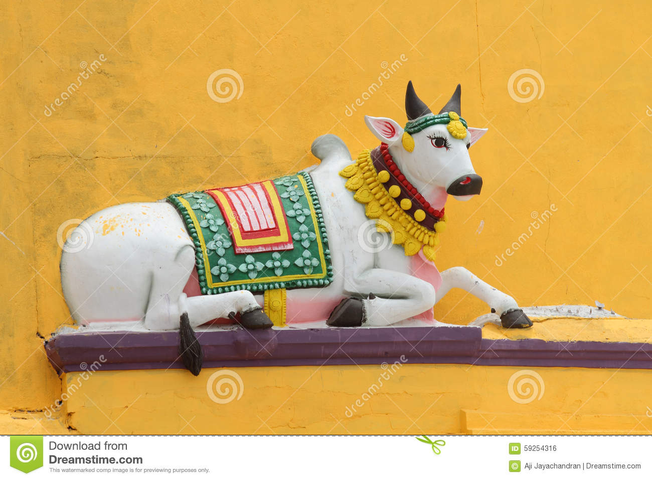 Nandi Stock Photos, Images, & Pictures.