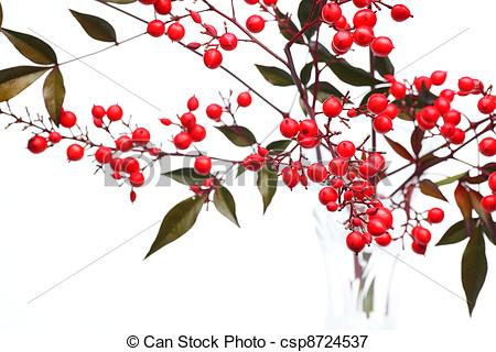 Picture of Nandina domestica.