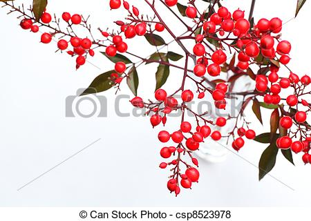 Pictures of Nandina domestica.