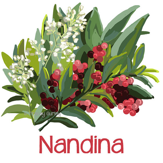 Nandina Painting Original Art nandina clip by TraceyGurleyDesigns.