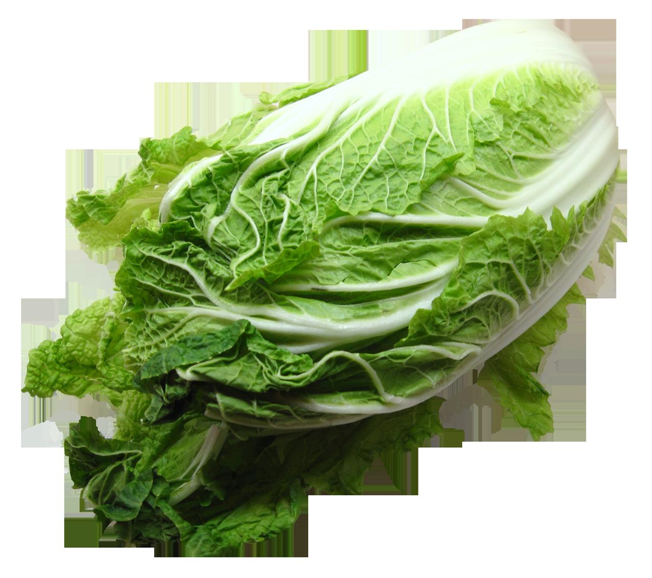 Napa Cabbage PNG Image.