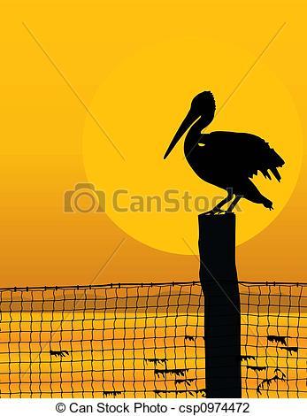 A pelikán, napnyugta.