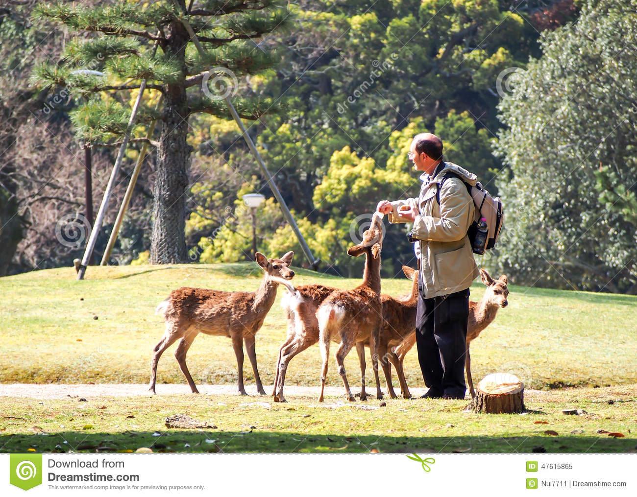 Feeding Deer In Nara, Japan 1 Editorial Image.
