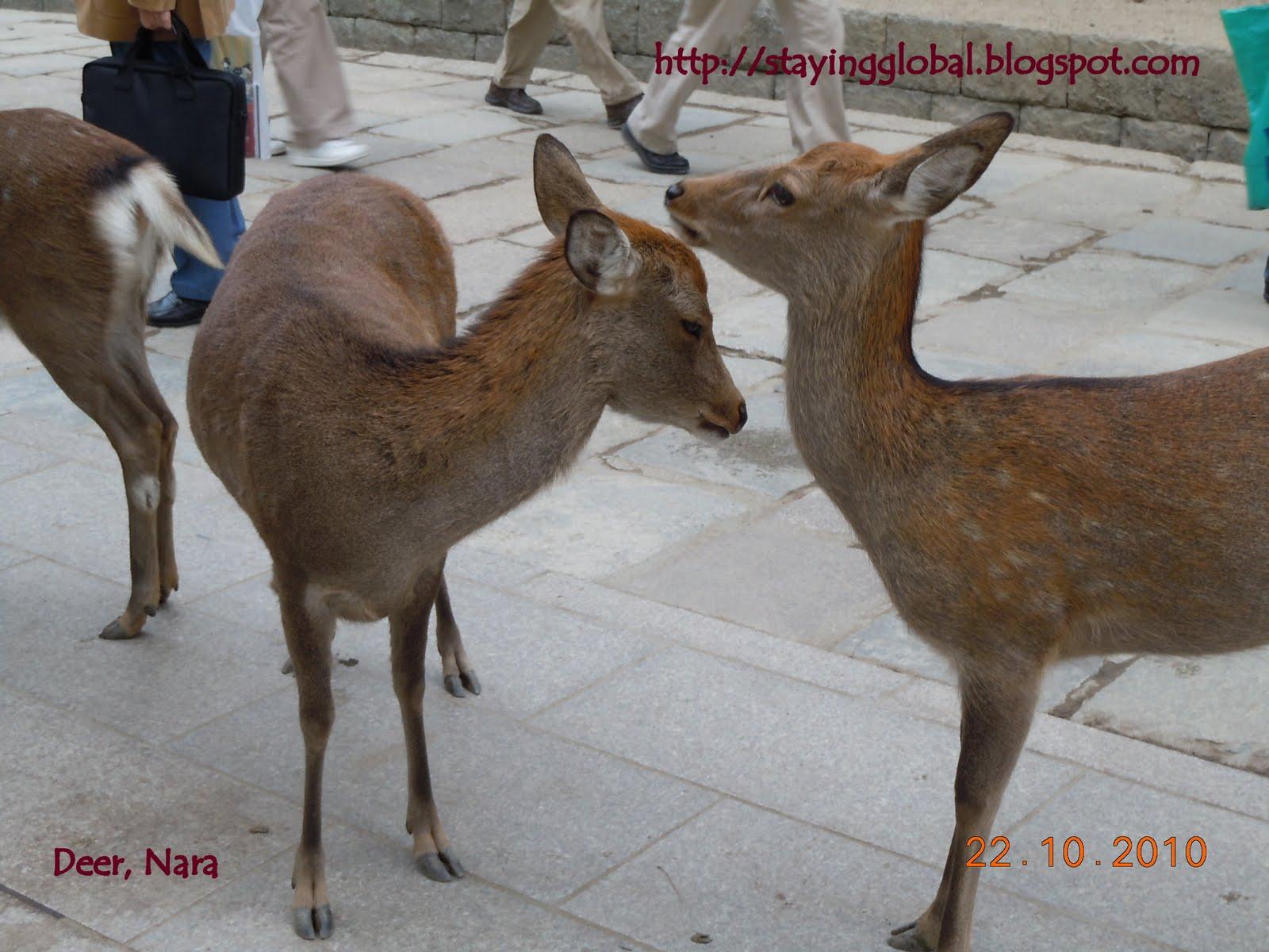 A Japanese Life: Nara.