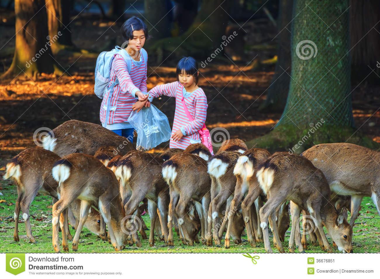 Feeding Sika Deers In Nara Park, Japan Editorial Photo.