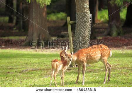 Deer Nara Park Stock Photo 486438646.