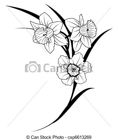 Narcissus Stock Illustrations. 1,595 Narcissus clip art images and.
