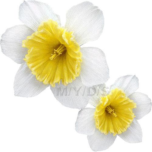 Narcissus clipart / Free clip art.
