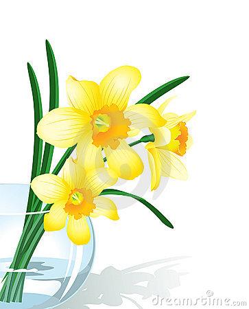 Narcissus Stock Illustrations.
