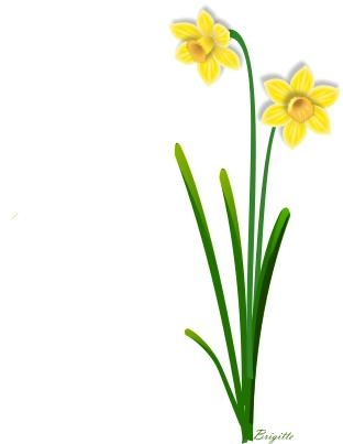 Narcissus flower clipart.