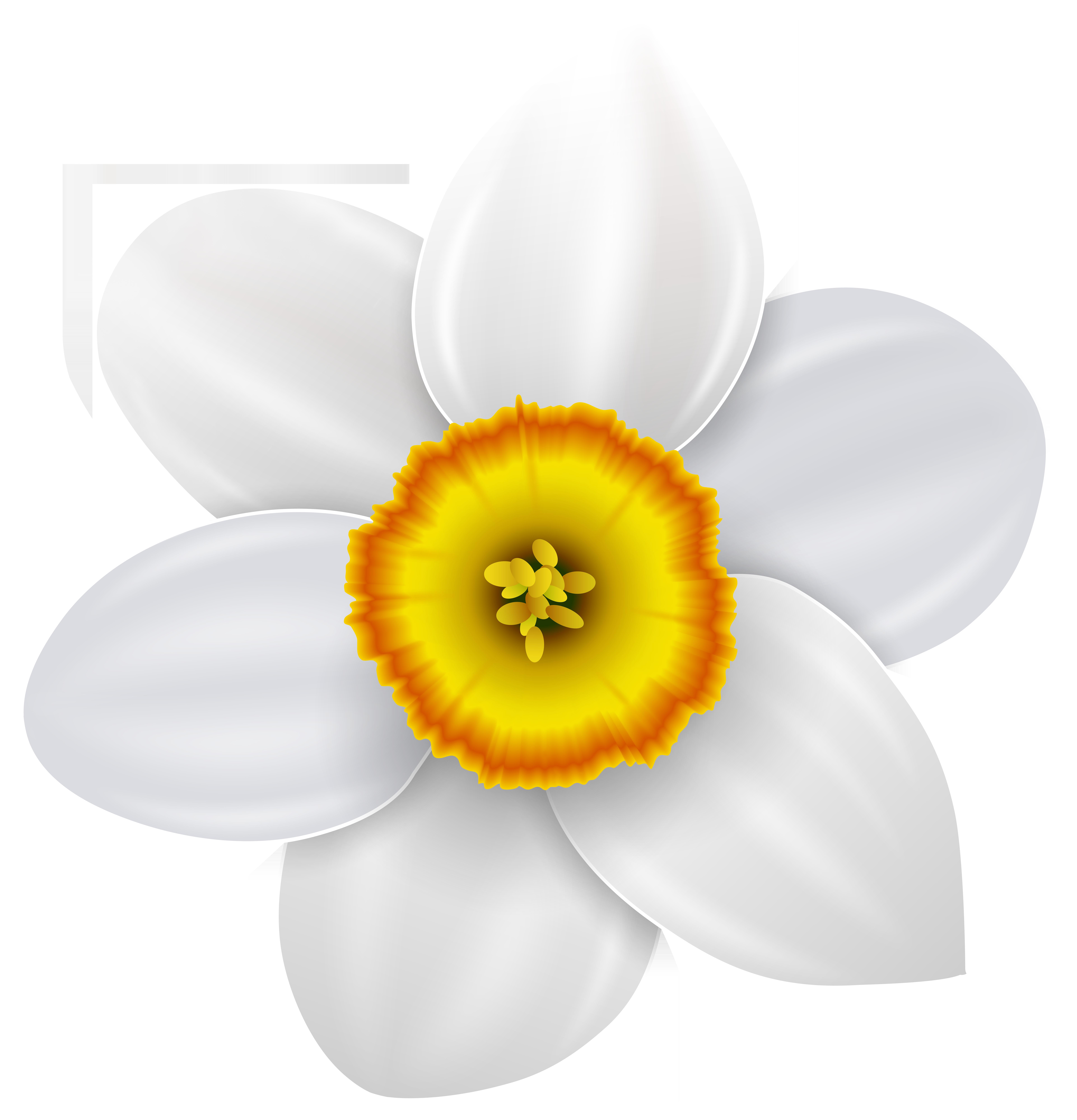 Narcissus Transparent PNG Clip Art Image.