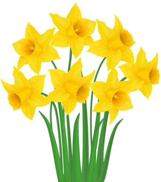 Yellow Daffodils PNG Transparent Clip Art Image.
